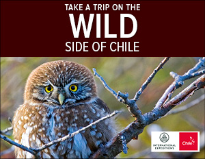 The Wild Side of Chile
