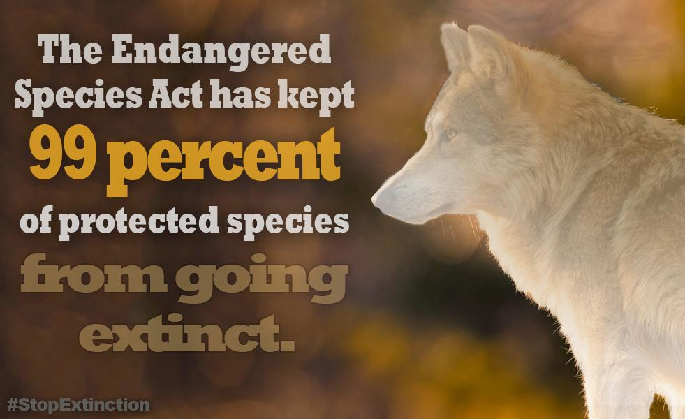 The Endangered Species Act has kept 99 percent of protected species from going extinct
