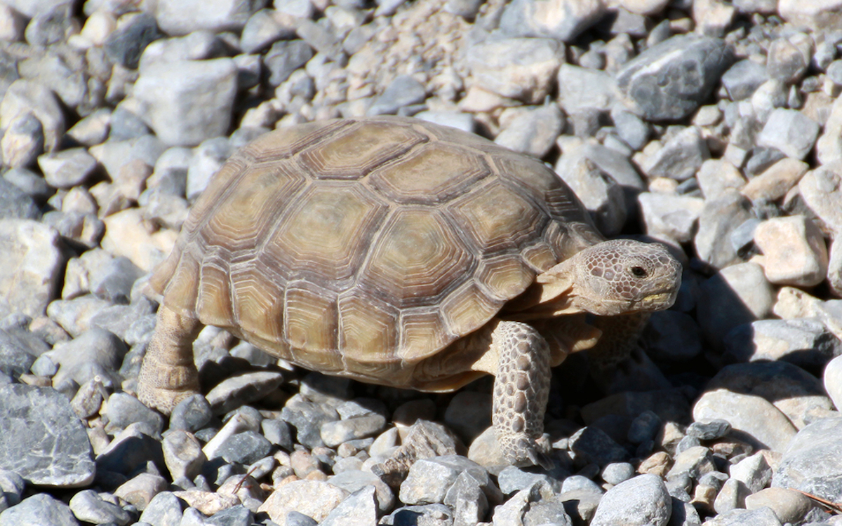 How many live turtles in captivity and wildlife