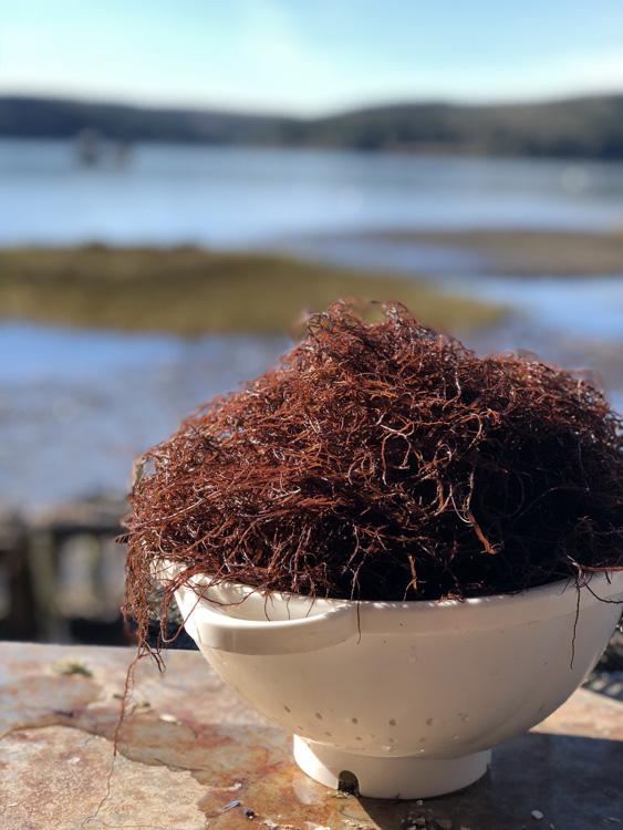 Meet the Women Behind California's First Open-Water Seaweed Farm