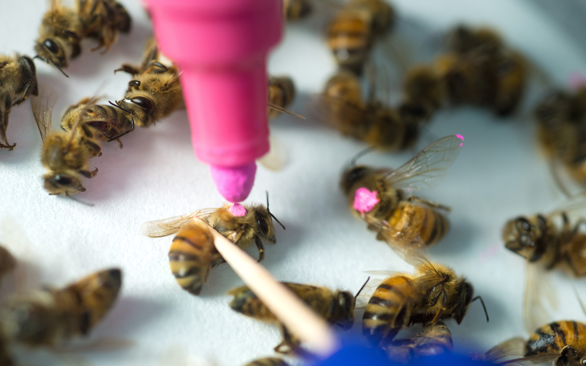 New Study Shows Roundup Kills Bees | Sierra Club