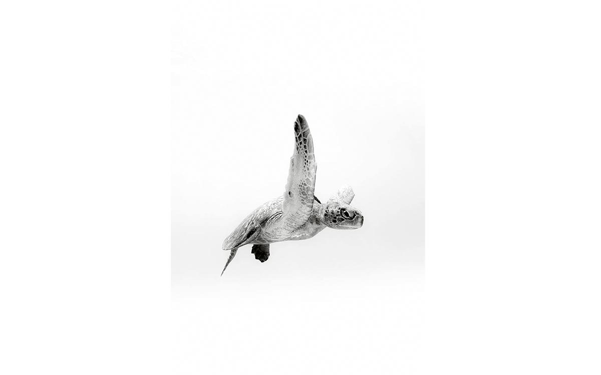 Christian Vizl's Underwater Photography 1
