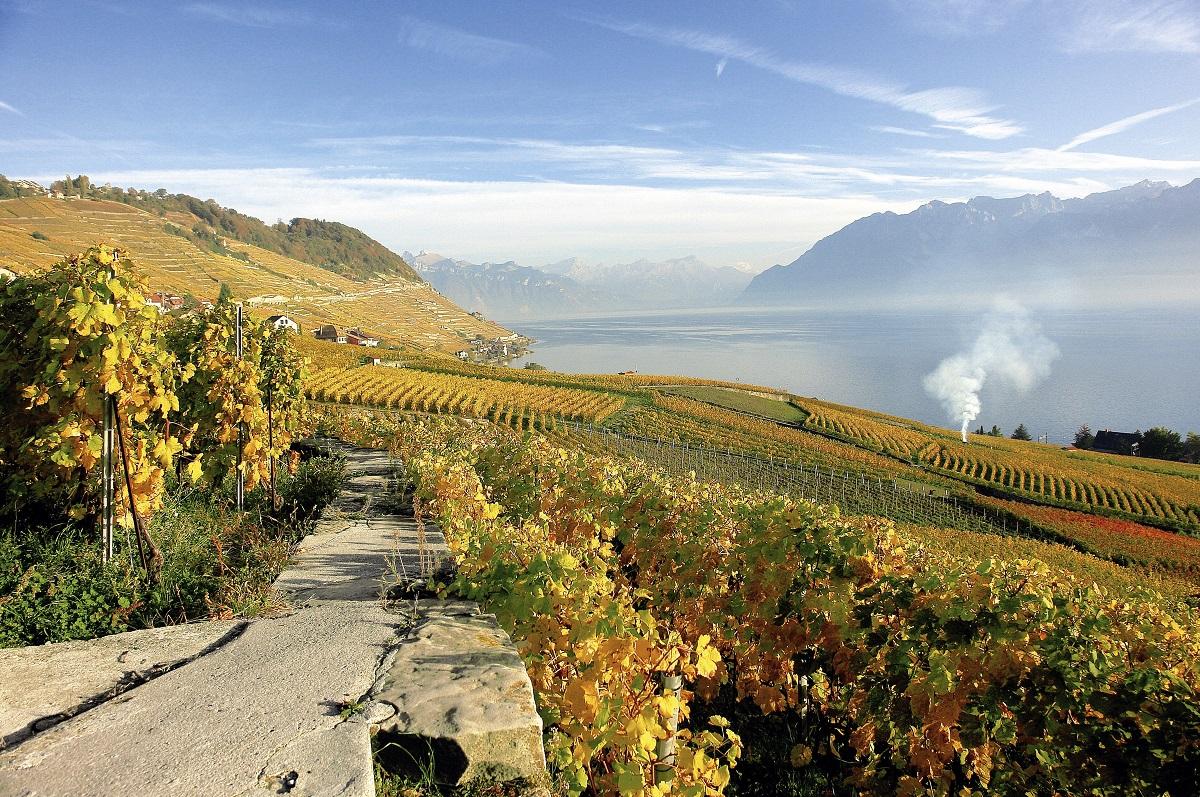 Savory Switzerland